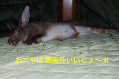 DSC_0111_20081212190927.jpg