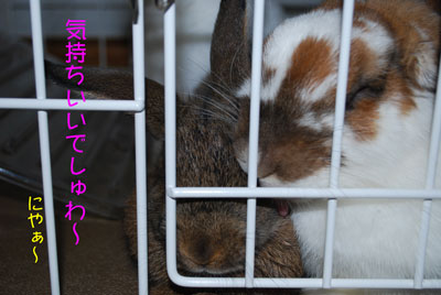 DSC_0113_20081031203532.jpg