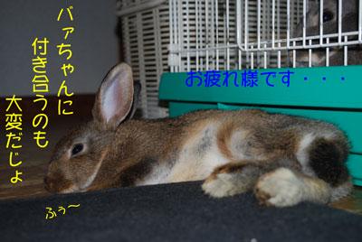 DSC_0229_20081101214559.jpg