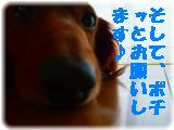 _2008_0709お~い0002