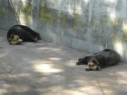 芦野公園 寝ているヒグマ