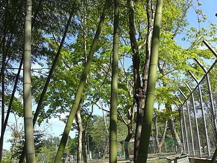 芦野公園 竹林