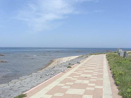 夏泊半島 遊歩道