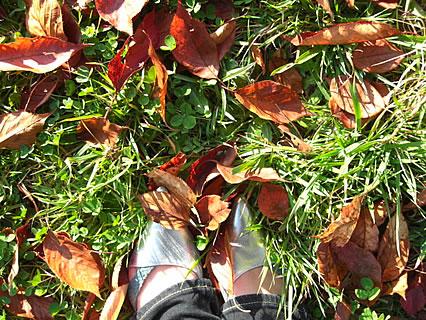野木和公園 落ち葉