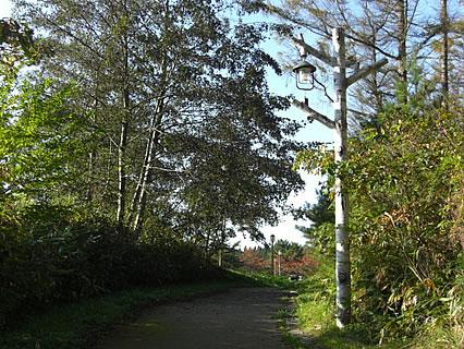 野木和公園 遊歩道