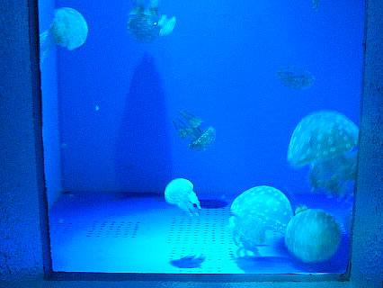 浅虫水族館 クラゲ
