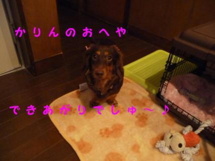 コピー ~ P1140748