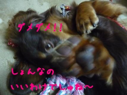 コピー ~ P1140861