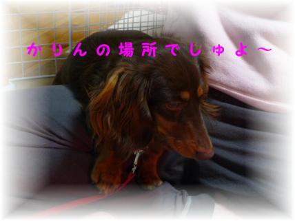 コピー ~ P1160379