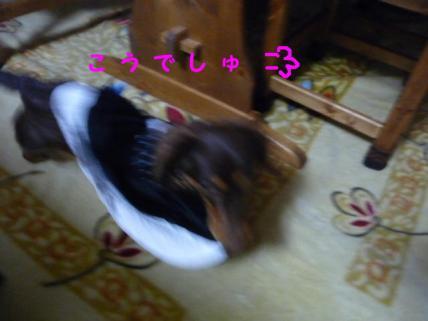 コピー ~ P1160748