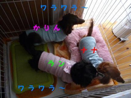 コピー ~ P1160107