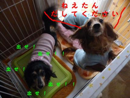 コピー ~ P1160108