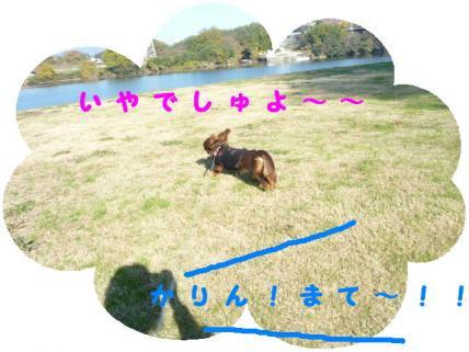 コピー ~ P1170152
