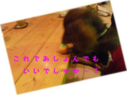 コピー ~ P1170686