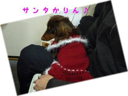 コピー ~ P1170732