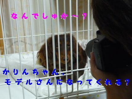 コピー ~ P1180763