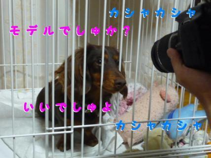 コピー ~ P1180764