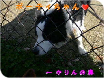 コピー ~ P1180705