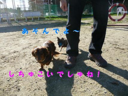 コピー ~ P1180752