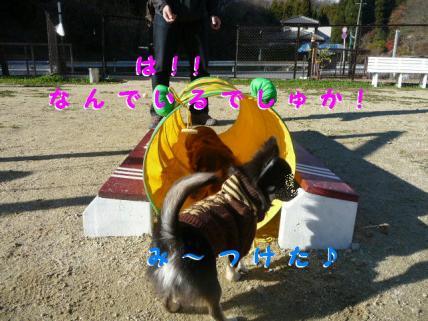 コピー ~ P1180754