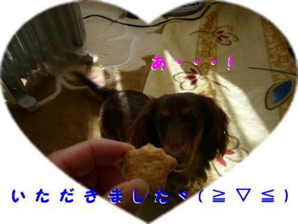 コピー ~ P1180816
