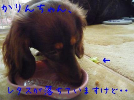 コピー ~ P1190032