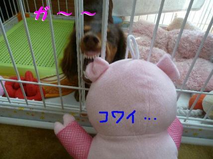 コピー ~ P1190106