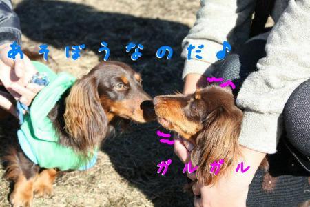 コピー ~ IMG_1398