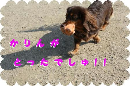 コピー ~ IMG_1672
