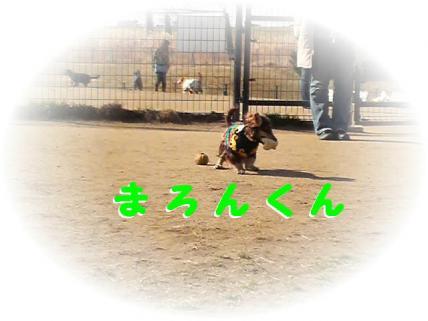 コピー ~ P1000551