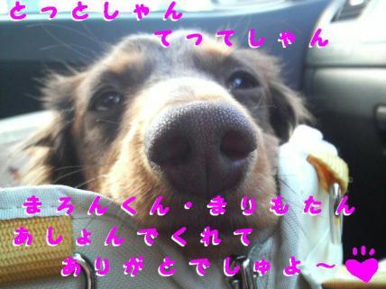 コピー ~ P1000599