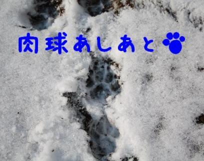 コピー ~ IMG_1843