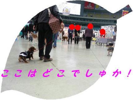コピー ~ P1200696