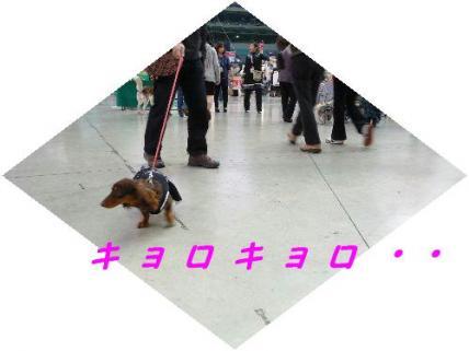 コピー ~ P1200697