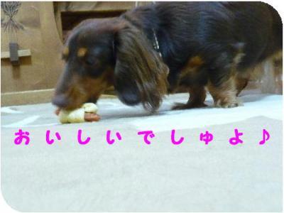コピー ~ P1210324