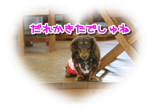 コピー ~ IMG_0054