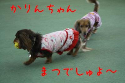 コピー ~ IMG_0071