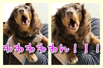 コピー ~ IMG_0213-horz