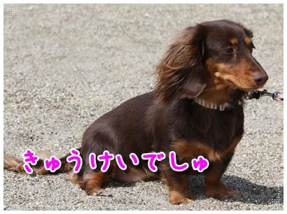 コピー ~ IMG_0227