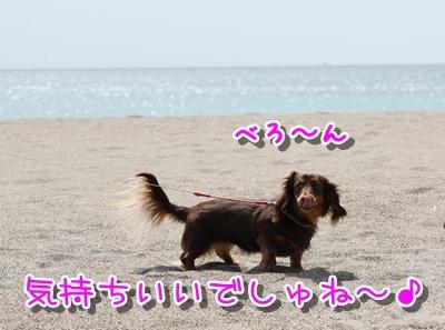 コピー ~ IMG_0215