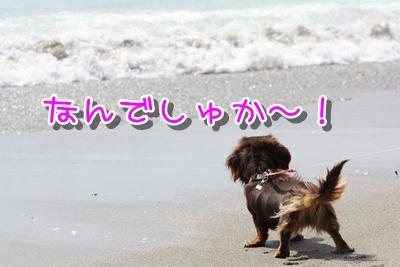 コピー ~ IMG_0269