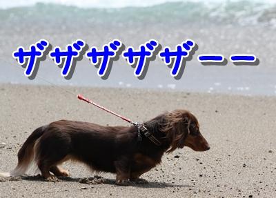 コピー ~ IMG_0249