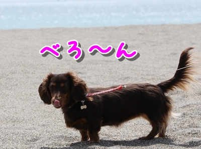 コピー ~ IMG_0232