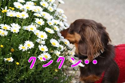コピー ~ IMG_0391