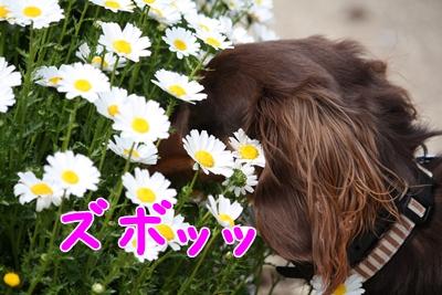 コピー ~ IMG_0393