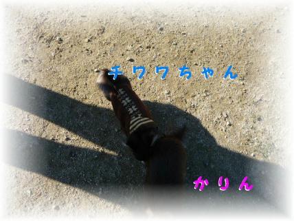 P1180747.jpg