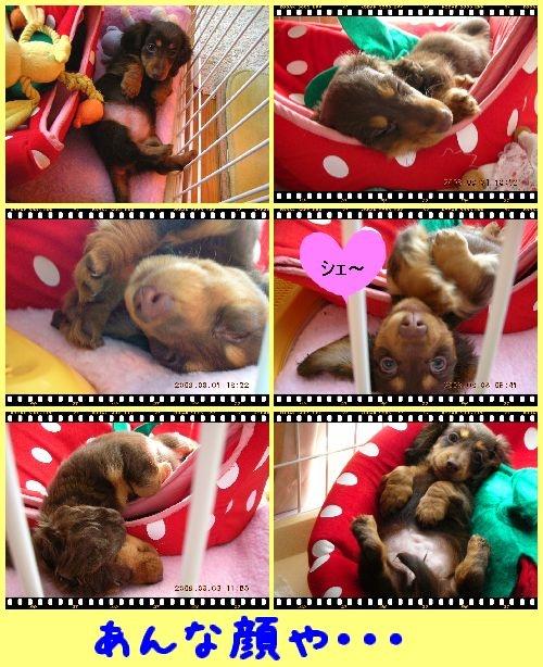 cats4_20090223114152.jpg