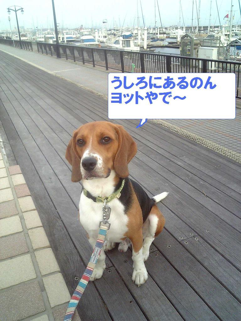 Image8641.jpg
