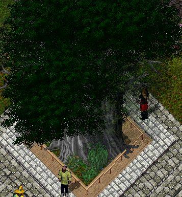 treemugen.jpg