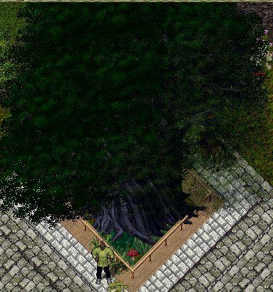 treesakura.jpg